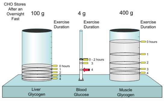 Kohlenhydrate beim Sport
